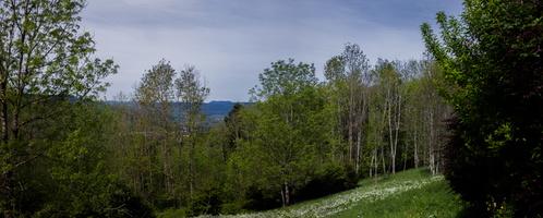 Panoramique
