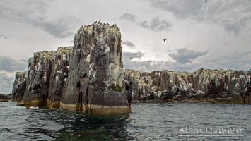 Farne-Island-1