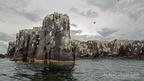 Farn Island
